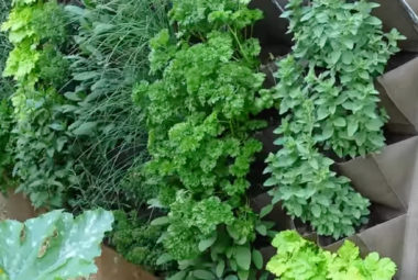 How To Grow A Verticle Garden